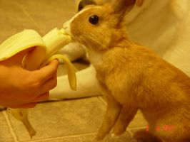 (OLD) Rabbit Eating a Banana by lalaweki