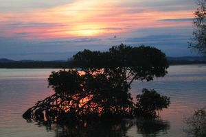 Mangrove Sunset by St3gs04