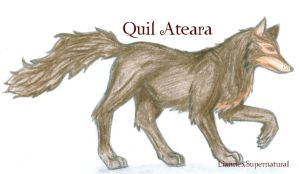 Quil Ateara wolf :D by LiannexSupernatural