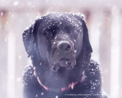 Snow Day by chris-is-a-deviant