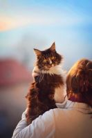 Maine Coon by marinsuslic