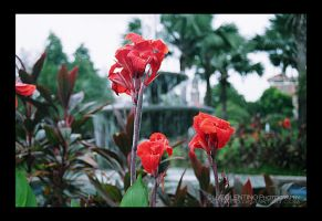 Red Flowers by LJ1983