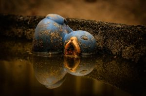 Blue Duck by Sudlice