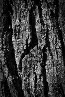 Bark in Black and white by ldynamicphotography