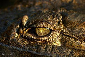 Crocodile eye by Kbulder