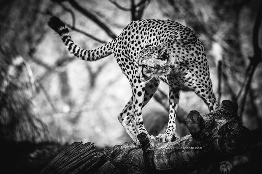 The Hunter by tanikel