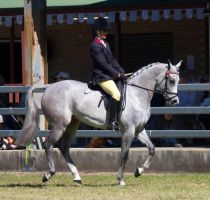 STOCK Canungra Show 2013-123 by fillyrox