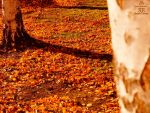 Wallpapers-Herbst2015-1600X1200px-V06112015005129 by Karoglan46