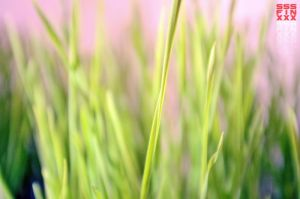 Safe gras by AndreiPavel