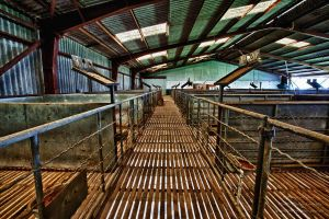 The Sheep Pens by FireflyPhotosAust