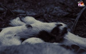 Free Wolves 9 by pixbird