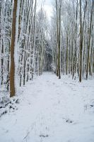 Snowscape Stock 65 by Sed-rah-Stock