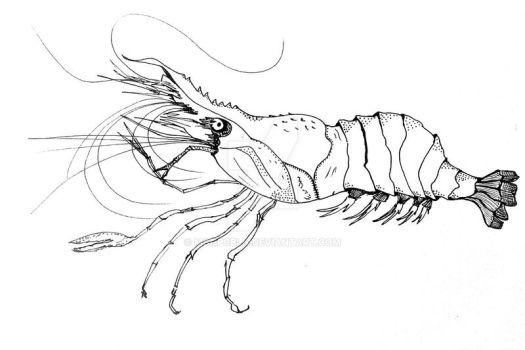 Lobster, for redesign by SyA by MgHPcbln