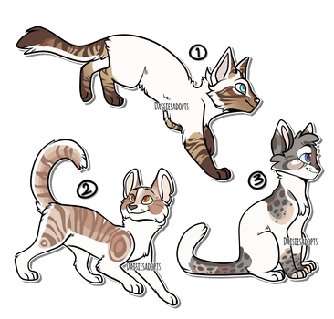 Cat adoptables | Auction | CLOSED by DaisiesAdopts