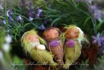 Three ooak fairy baby cocoons by dodoalbino