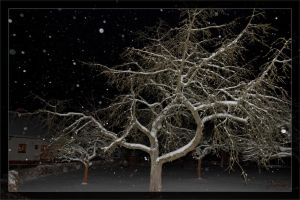 Winter tree at night by deaconfrost78