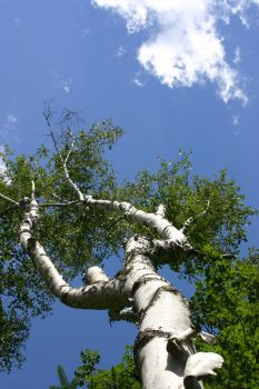 Reaching for the Sky by CBac