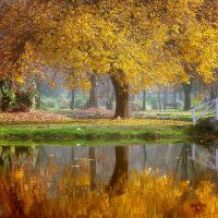 Autumn memories by Bojkovski