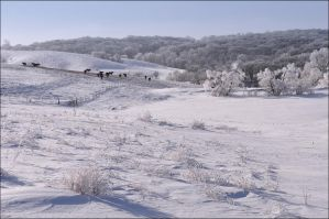 Horses in the Snowy Fields by bacardi870