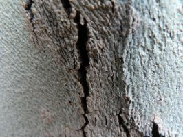 Cracked bark1 by CircuitDruid-stock