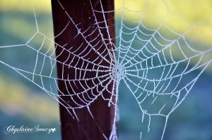Frosted web by gigi50