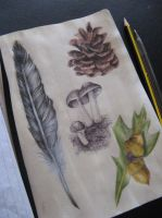 Natural forms sketchbook page by haloanime97