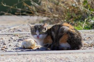 Stray cat by Jorapache