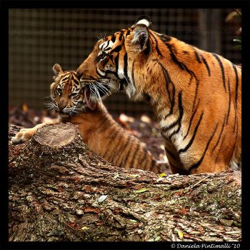 Mothers Love IV by TVD-Photography