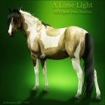 Limelight by VIP-EquineArt