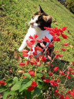 Calico Cat03 by effing-stock