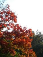 Fall colors by AudiVideTace