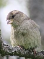 Sparrow 3 by Isabella3991