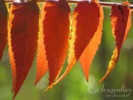 Staghorn Sumac Tree 16 by jcdragonflies
