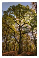 autumn colours III by adypetrisor