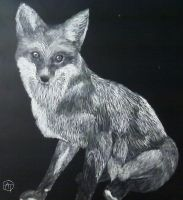 Fox Scratchboard by canadianwolfenris