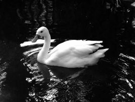 Swan of the Lake by DancingInTwilight