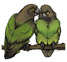 Brown-headed Parrot Love by lyosha