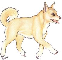 Canaan Dog Puppy by Korrok
