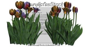 3D object - tulips by AzurylipfesStock