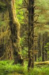 Moss covered Trees by grodpro