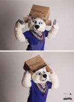 A arctic wolf with a box by nlorier