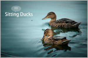 Sitting Ducks by bebelens