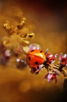 Autumn lady bug. by maziak-ciut-inaczej