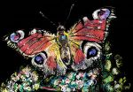 Butterfly by dessinateur777