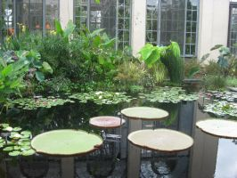 Lilly Pads by ZeroIQ5