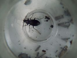 beetle in a tub by harrietbaxter