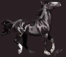black warmblood by theOvercoat