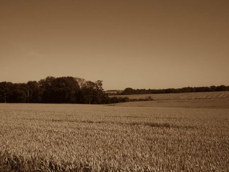 Field in Bornholm by yootje