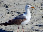 Seagull 01 by Worldboy1