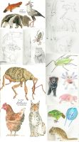 Daily doodles - Sketchdump by Woodswallow